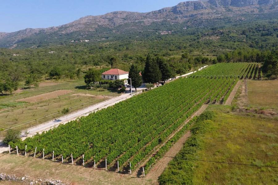 Winery Botaro