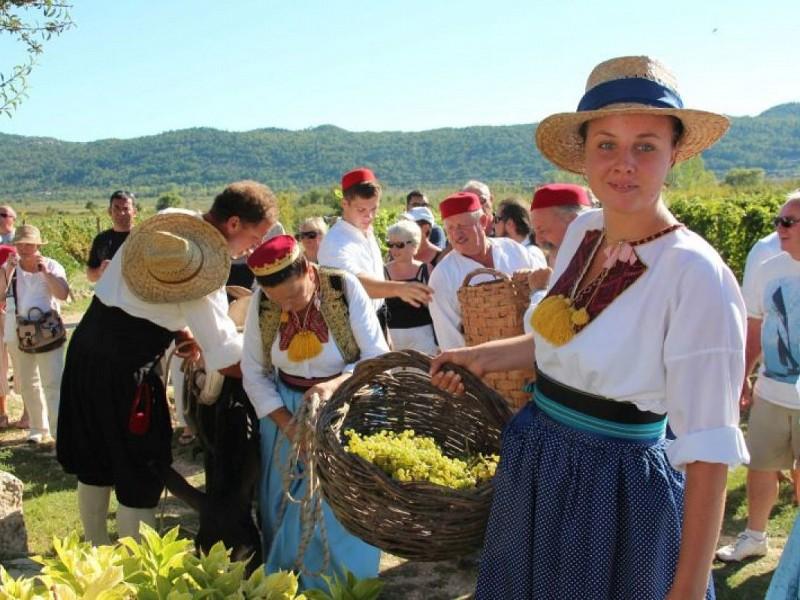 Trganje - tradicionalna berba grožđa i pravljenje misnog vina u Konavlima